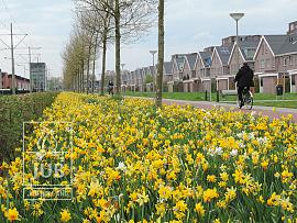 Mengsel Middelburg