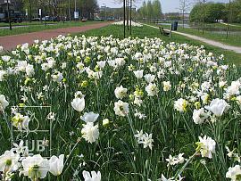 Mischung Zwolle