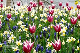Palette of Spring