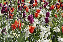 Fresh Spring