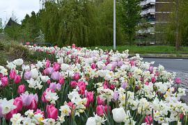 Massive Spring