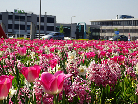 Pink Revival