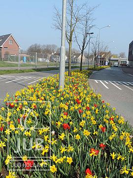 Bloembollen Mengsel Arnhem