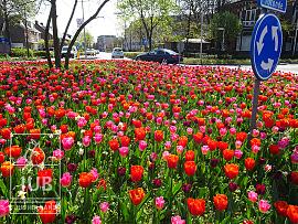 Amalia roundabout