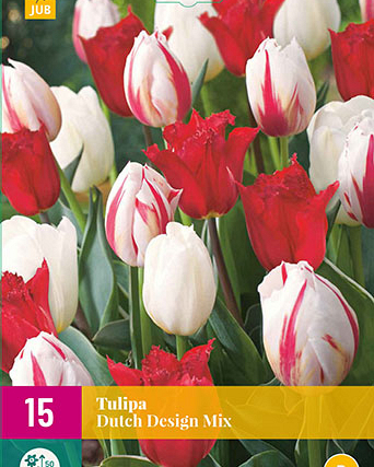 X 15 TULIPA DUTCH DESIGN MIX 11/12