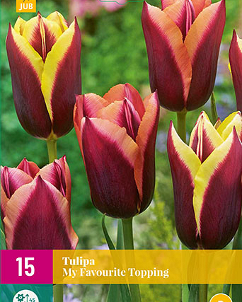 X 15 TULIPA MY FAVOURITE TOPPING 11/12