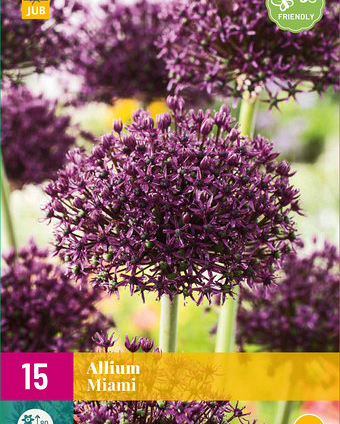 X 15 ALLIUM MIAMI 10/+