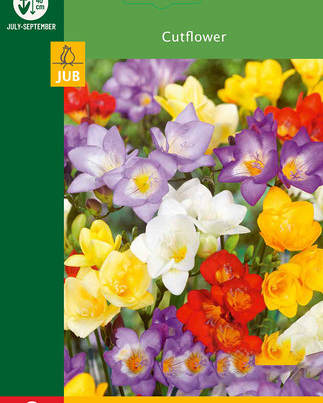 X  8 FREESIA MIX 5/+