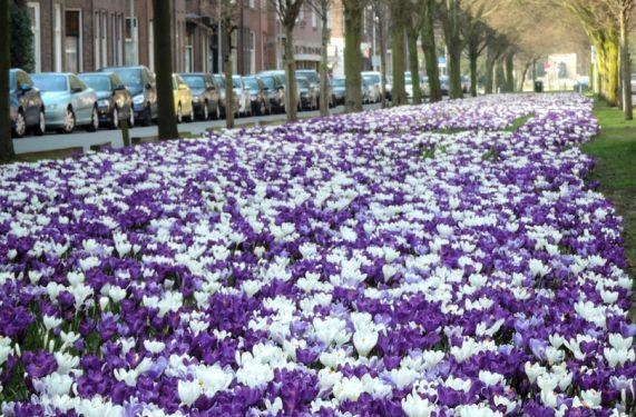 JUB Holland