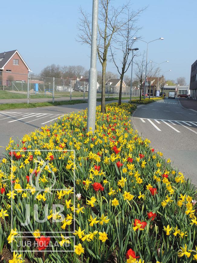 Mengsel Arnhem