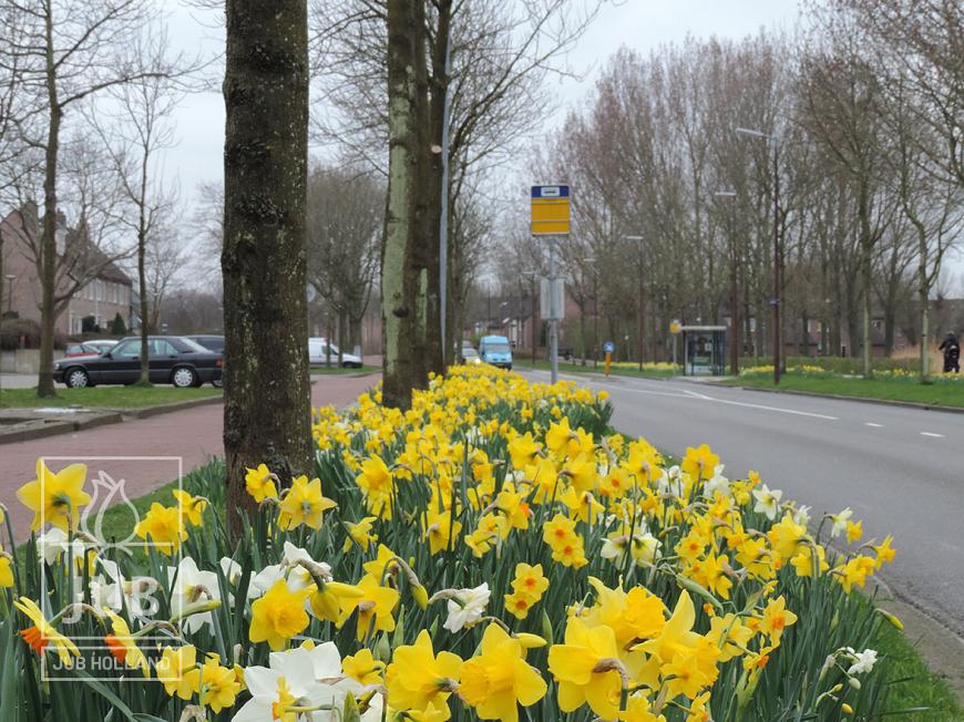 Mengsel Amsterdam