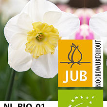 NARCISSUS PAPILLON BLANC BIOLOGISCH