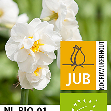 NARCISSUS BRIDAL CROWN BIOLOGISCH