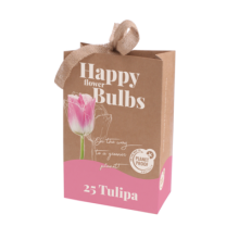X 1 TAS HAPPY FLOWER BULBS 25 TULIPA DYNASTY (PP) 11/12