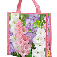 X 1 SHOPPING BAG 40 GLADIOLUS PASTEL MIX 12/14