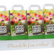 OMDOOS 12 TASSEN 5 DAHLIA DECORATIEF MIX I