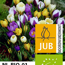 CROCUS SPECIES MIX BIOLOGISCH