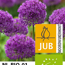 ALLIUM PURPLE SENSATION BIOLOGISCH
